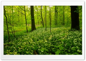 Green Wood HD Wide Wallpaper for 4K UHD Widescreen desktop & smartphone