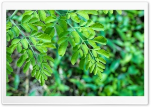 Greenery HD Wide Wallpaper for Widescreen