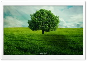 GreenTree HD Wide Wallpaper for Widescreen