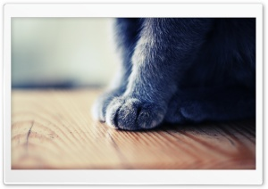 Grey Paws HD Wide Wallpaper for Widescreen