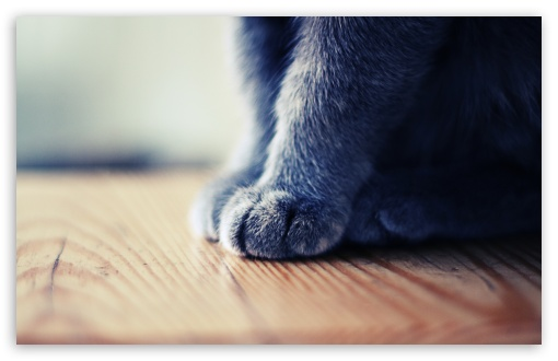 Grey Paws HD wallpaper for Wide 16:10 5:3 Widescreen WHXGA WQXGA WUXGA WXGA WGA ; HD 16:9 High Definition WQHD QWXGA 1080p 900p 720p QHD nHD ; UHD 16:9 WQHD QWXGA 1080p 900p 720p QHD nHD ; Standard 4:3 5:4 3:2 Fullscreen UXGA XGA SVGA QSXGA SXGA DVGA HVGA HQVGA devices ( Apple PowerBook G4 iPhone 4 3G 3GS iPod Touch ) ; Tablet 1:1 ; iPad 1/2/Mini ; Mobile 4:3 5:3 3:2 16:9 5:4 - UXGA XGA SVGA WGA DVGA HVGA HQVGA devices ( Apple PowerBook G4 iPhone 4 3G 3GS iPod Touch ) WQHD QWXGA 1080p 900p 720p QHD nHD QSXGA SXGA ;