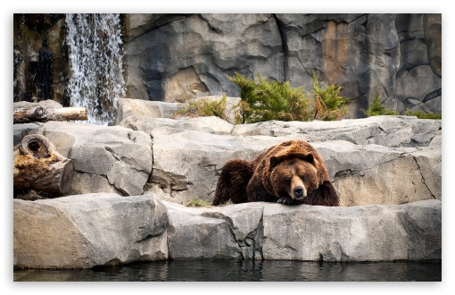 Grizzly Bear, Zoo HD wallpaper for Wide 16:10 5:3 Widescreen WHXGA WQXGA WUXGA WXGA WGA ; HD 16:9 High Definition WQHD QWXGA 1080p 900p 720p QHD nHD ; Standard 4:3 5:4 3:2 Fullscreen UXGA XGA SVGA QSXGA SXGA DVGA HVGA HQVGA devices ( Apple PowerBook G4 iPhone 4 3G 3GS iPod Touch ) ; Tablet 1:1 ; iPad 1/2/Mini ; Mobile 4:3 5:3 3:2 16:9 5:4 - UXGA XGA SVGA WGA DVGA HVGA HQVGA devices ( Apple PowerBook G4 iPhone 4 3G 3GS iPod Touch ) WQHD QWXGA 1080p 900p 720p QHD nHD QSXGA SXGA ;