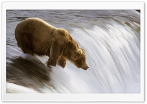 Grizzly Fishing In The Brooks River Katmai National Park Alaska HD Wide Wallpaper for Widescreen