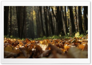 Ground Leafage HD Wide Wallpaper for Widescreen