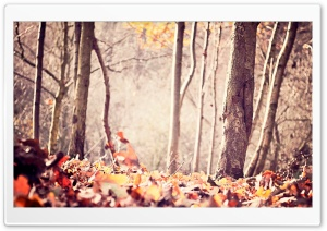 Ground Leafage, Autumn HD Wide Wallpaper for Widescreen