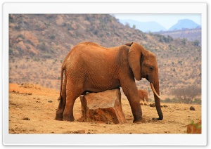 Grounded Elephant HD Wide Wallpaper for Widescreen