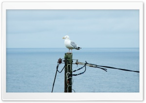 Gull Perched HD Wide Wallpaper for Widescreen