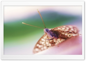 Hackberry Emperor Butterfly HD Wide Wallpaper for Widescreen