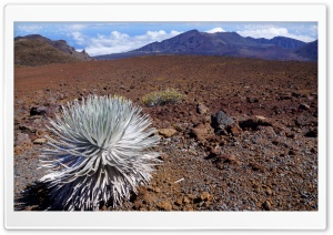 Haleakala National Park, Maui, Hawaii HD Wide Wallpaper for Widescreen