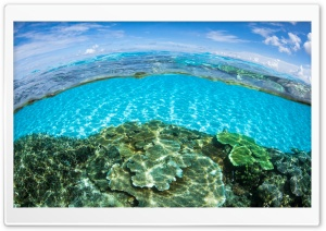 Half Underwater Half Above Water HD Wide Wallpaper for Widescreen