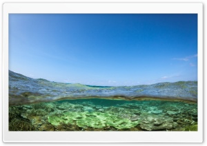 Half Underwater Shot HD Wide Wallpaper for Widescreen