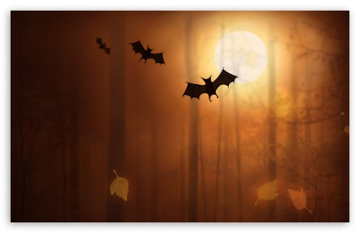 Halloween Bats HD wallpaper for Standard 4:3 5:4 Fullscreen UXGA XGA SVGA QSXGA SXGA ; Wide 16:10 5:3 Widescreen WHXGA WQXGA WUXGA WXGA WGA ; HD 16:9 High Definition WQHD QWXGA 1080p 900p 720p QHD nHD ; Other 3:2 DVGA HVGA HQVGA devices ( Apple PowerBook G4 iPhone 4 3G 3GS iPod Touch ) ; Mobile VGA WVGA iPhone iPad PSP Phone - VGA QVGA Smartphone ( PocketPC GPS iPod Zune BlackBerry HTC Samsung LG Nokia Eten Asus ) WVGA WQVGA Smartphone ( HTC Samsung Sony Ericsson LG Vertu MIO ) HVGA Smartphone ( Apple iPhone iPod BlackBerry HTC Samsung Nokia ) Sony PSP Zune HD Zen ; Tablet 2 Android ; Dual 4:3 5:4 16:10 5:3 16:9 UXGA XGA SVGA QSXGA SXGA WHXGA WQXGA WUXGA WXGA WGA WQHD QWXGA 1080p 900p 720p QHD nHD ;
