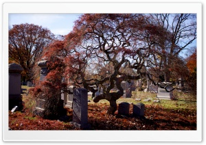 Halloween Cemetery HD Wide Wallpaper for Widescreen