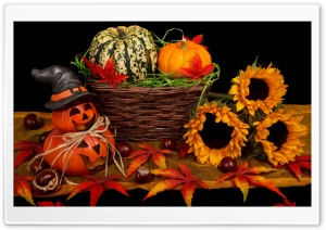 Halloween Decorations  2016 HD Wide Wallpaper for Widescreen