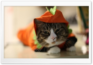 Halloween Funny Cat HD Wide Wallpaper for Widescreen