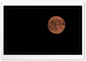 Halloween Moon Ultra HD Wallpaper for 4K UHD Widescreen desktop, tablet & smartphone