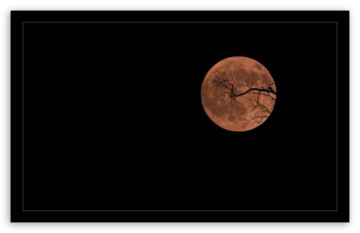Halloween Moon HD wallpaper for Wide 16:10 Widescreen WHXGA WQXGA WUXGA WXGA ;