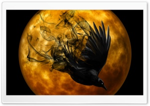 Halloween Raven HD Wide Wallpaper for Widescreen