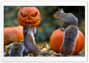 Halloween Squirrels HD Wide Wallpaper for Widescreen