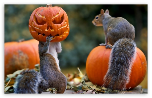 Halloween Squirrels ❤ 4K UHD Wallpaper for Wide 16:10 5:3 Widescreen WHXGA WQXGA WUXGA WXGA WGA ; 4K UHD 16:9 Ultra High Definition 2160p 1440p 1080p 900p 720p ; Standard 4:3 5:4 3:2 Fullscreen UXGA XGA SVGA QSXGA SXGA DVGA HVGA HQVGA ( Apple PowerBook G4 iPhone 4 3G 3GS iPod Touch ) ; Tablet 1:1 ; iPad 1/2/Mini ; Mobile 4:3 5:3 3:2 16:9 5:4 - UXGA XGA SVGA WGA DVGA HVGA HQVGA ( Apple PowerBook G4 iPhone 4 3G 3GS iPod Touch ) 2160p 1440p 1080p 900p 720p QSXGA SXGA ;