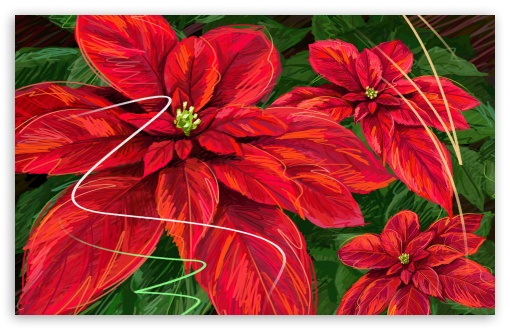Hand Drawn Poinsettia ❤ 4K UHD Wallpaper for Wide 16:10 5:3 Widescreen WHXGA WQXGA WUXGA WXGA WGA ; 4K UHD 16:9 Ultra High Definition 2160p 1440p 1080p 900p 720p ; Standard 3:2 Fullscreen DVGA HVGA HQVGA ( Apple PowerBook G4 iPhone 4 3G 3GS iPod Touch ) ; Mobile 5:3 3:2 16:9 - WGA DVGA HVGA HQVGA ( Apple PowerBook G4 iPhone 4 3G 3GS iPod Touch ) 2160p 1440p 1080p 900p 720p ;