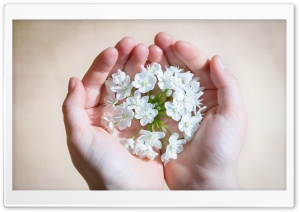 Hands Holding Flowers HD Wide Wallpaper for Widescreen