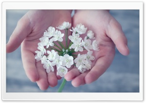 Hands Holding Spring Flowers HD Wide Wallpaper for 4K UHD Widescreen desktop & smartphone