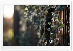 Hanging Plant HD Wide Wallpaper for Widescreen