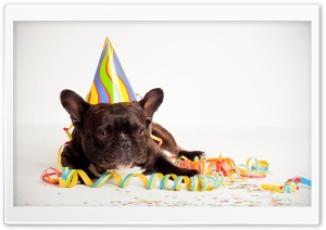 Happy Birthday Dog HD Wide Wallpaper for Widescreen