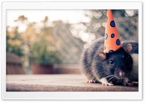 Happy Birthday Mouse Ultra HD Wallpaper for 4K UHD Widescreen desktop, tablet & smartphone