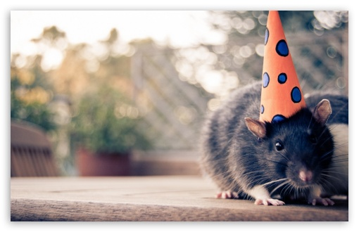 Download Happy Birthday Mouse UltraHD Wallpaper