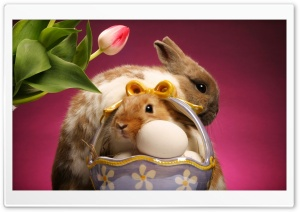 Happy Easter HD Wide Wallpaper for 4K UHD Widescreen desktop & smartphone