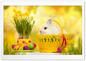 Happy Easter Bunny HD Wide Wallpaper for 4K UHD Widescreen desktop & smartphone