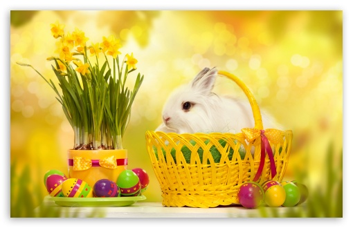 Happy Easter Bunny ❤ 4K UHD Wallpaper for Wide 16:10 5:3 Widescreen WHXGA WQXGA WUXGA WXGA WGA ; 4K UHD 16:9 Ultra High Definition 2160p 1440p 1080p 900p 720p ; UHD 16:9 2160p 1440p 1080p 900p 720p ; Standard 4:3 5:4 3:2 Fullscreen UXGA XGA SVGA QSXGA SXGA DVGA HVGA HQVGA ( Apple PowerBook G4 iPhone 4 3G 3GS iPod Touch ) ; Tablet 1:1 ; iPad 1/2/Mini ; Mobile 4:3 5:3 3:2 16:9 5:4 - UXGA XGA SVGA WGA DVGA HVGA HQVGA ( Apple PowerBook G4 iPhone 4 3G 3GS iPod Touch ) 2160p 1440p 1080p 900p 720p QSXGA SXGA ;