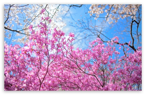 Happy Spring HD wallpaper for Wide 16:10 5:3 Widescreen WHXGA WQXGA WUXGA WXGA WGA ; HD 16:9 High Definition WQHD QWXGA 1080p 900p 720p QHD nHD ; UHD 16:9 WQHD QWXGA 1080p 900p 720p QHD nHD ; Standard 4:3 5:4 3:2 Fullscreen UXGA XGA SVGA QSXGA SXGA DVGA HVGA HQVGA devices ( Apple PowerBook G4 iPhone 4 3G 3GS iPod Touch ) ; Smartphone 5:3 WGA ; Tablet 1:1 ; iPad 1/2/Mini ; Mobile 4:3 5:3 3:2 16:9 5:4 - UXGA XGA SVGA WGA DVGA HVGA HQVGA devices ( Apple PowerBook G4 iPhone 4 3G 3GS iPod Touch ) WQHD QWXGA 1080p 900p 720p QHD nHD QSXGA SXGA ; Dual 16:10 5:3 16:9 4:3 5:4 WHXGA WQXGA WUXGA WXGA WGA WQHD QWXGA 1080p 900p 720p QHD nHD UXGA XGA SVGA QSXGA SXGA ;