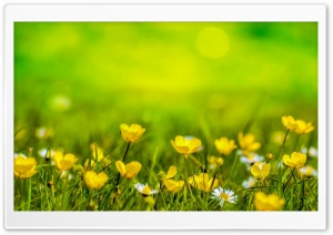 Happy Spring HD Wide Wallpaper for Widescreen