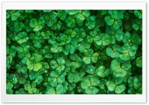 Happy St Patricks Day 2016 HD Wide Wallpaper for 4K UHD Widescreen desktop & smartphone