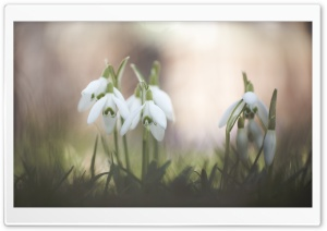 Harbinger of Spring HD Wide Wallpaper for Widescreen