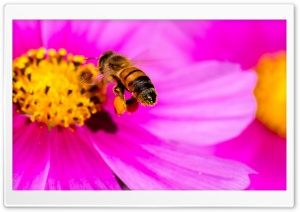 Hard-working Bee HD Wide Wallpaper for Widescreen