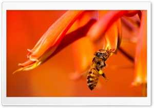 Hard-working HoneyBee HD Wide Wallpaper for 4K UHD Widescreen desktop & smartphone