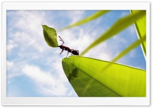 Hardworking Ant HD Wide Wallpaper for Widescreen