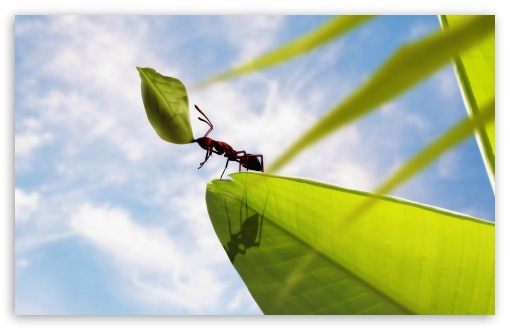 Hardworking Ant 4K HD Desktop Wallpaper for 4K Ultra HD TV ...