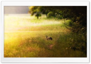 Hare Glade HD Wide Wallpaper for Widescreen