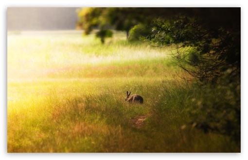 Hare Glade HD wallpaper for Wide 16:10 5:3 Widescreen WHXGA WQXGA WUXGA WXGA WGA ; HD 16:9 High Definition WQHD QWXGA 1080p 900p 720p QHD nHD ; Standard 4:3 5:4 3:2 Fullscreen UXGA XGA SVGA QSXGA SXGA DVGA HVGA HQVGA devices ( Apple PowerBook G4 iPhone 4 3G 3GS iPod Touch ) ; Tablet 1:1 ; iPad 1/2/Mini ; Mobile 4:3 5:3 3:2 16:9 5:4 - UXGA XGA SVGA WGA DVGA HVGA HQVGA devices ( Apple PowerBook G4 iPhone 4 3G 3GS iPod Touch ) WQHD QWXGA 1080p 900p 720p QHD nHD QSXGA SXGA ; Dual 16:10 5:3 16:9 4:3 5:4 WHXGA WQXGA WUXGA WXGA WGA WQHD QWXGA 1080p 900p 720p QHD nHD UXGA XGA SVGA QSXGA SXGA ;