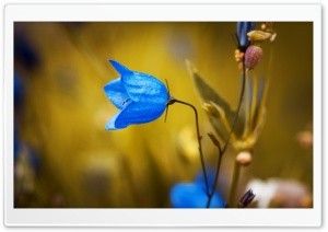 Harebell Flower HD Wide Wallpaper for Widescreen