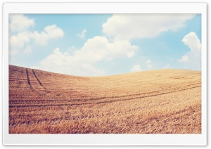 Harvest Field HD Wide Wallpaper for Widescreen