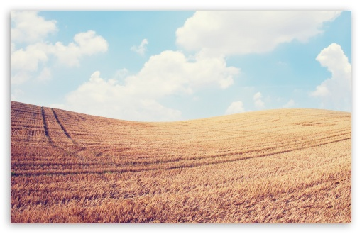 Harvest Field ❤ 4K UHD Wallpaper for Wide 16:10 5:3 Widescreen WHXGA WQXGA WUXGA WXGA WGA ; 4K UHD 16:9 Ultra High Definition 2160p 1440p 1080p 900p 720p ; Standard 4:3 5:4 3:2 Fullscreen UXGA XGA SVGA QSXGA SXGA DVGA HVGA HQVGA ( Apple PowerBook G4 iPhone 4 3G 3GS iPod Touch ) ; Tablet 1:1 ; iPad 1/2/Mini ; Mobile 4:3 5:3 3:2 16:9 5:4 - UXGA XGA SVGA WGA DVGA HVGA HQVGA ( Apple PowerBook G4 iPhone 4 3G 3GS iPod Touch ) 2160p 1440p 1080p 900p 720p QSXGA SXGA ;