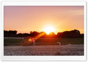 Harvest Sun HD Wide Wallpaper for Widescreen