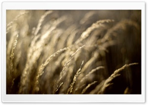 Harvesting Light HD Wide Wallpaper for Widescreen