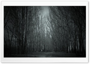 Haunted Forest HD Wide Wallpaper for 4K UHD Widescreen desktop & smartphone